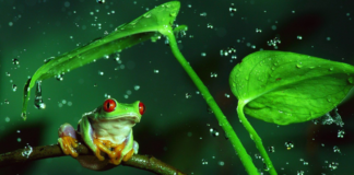Froggers e il People Branding