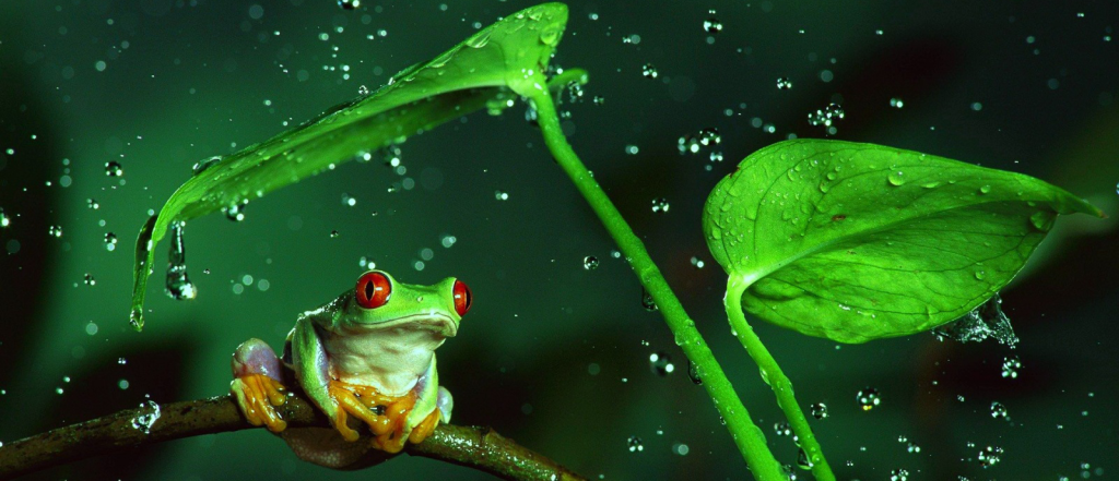 frog-style-1024x441